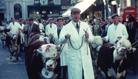 hereford_1956_copy